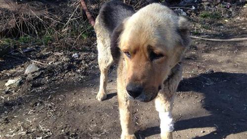 Гастарбайтеры жестоко изнасиловали собаку в Туле
