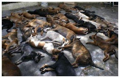 В Китае заживо закопали 100 собачек